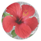 A Stunning Scarlet Hibiscus Tropical Flower Plate