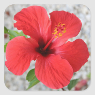 A Stunning Scarlet Hibiscus Tropical Flower Square Sticker