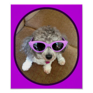 A STYLING POODLE POSTER