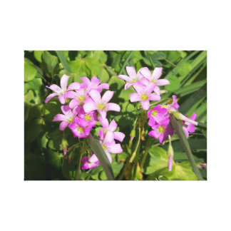 A sunny close up of pink wildflowers canvas print