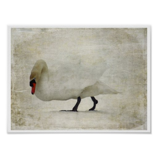 A Swan's Awakening Poster