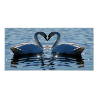 A Swimming Swan Heart Kiss, Reflections of Love Poster