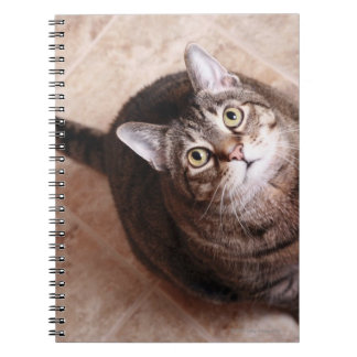 A tabby cat looking up note book