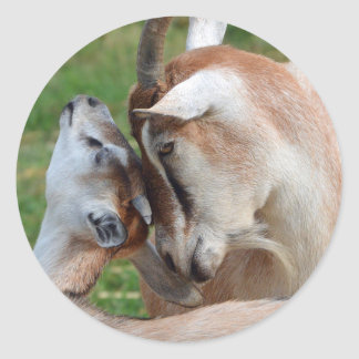A Tender Moment Goats Mother & Baby Classic Round Sticker