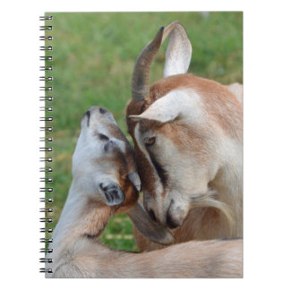 A Tender Moment Mother & Baby Goats Notebook