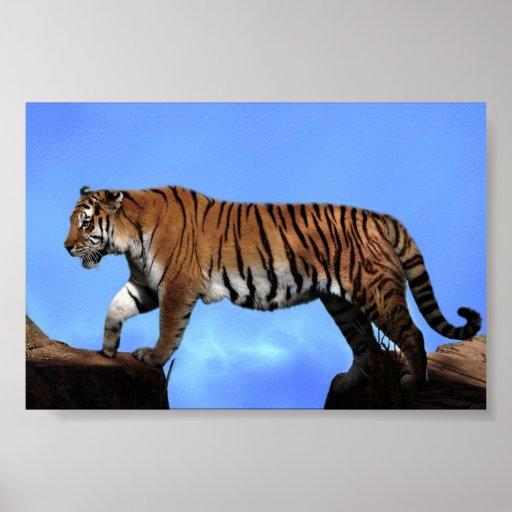 A tigers success poster