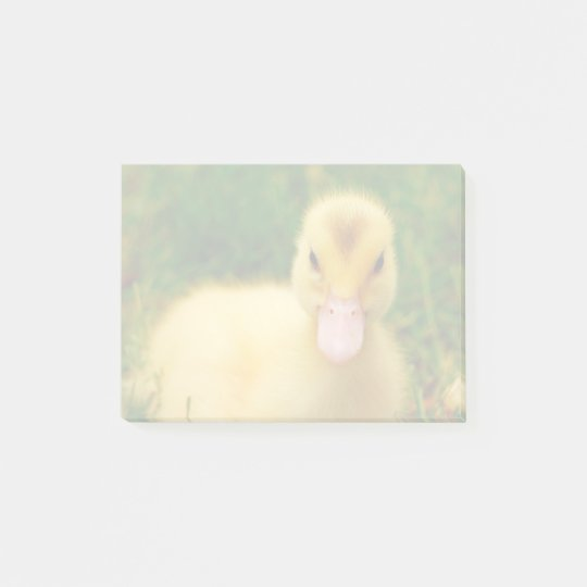 A Tiny Duckling With A Pink Beak Post-it Notes