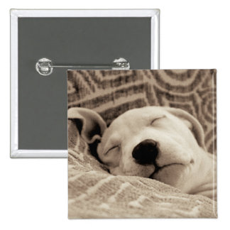 A Tired Dog 2 Inch Square Button