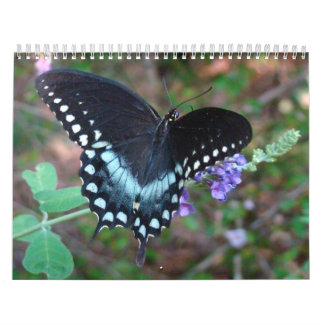 A Touch of the Sun Butterfly Calendars