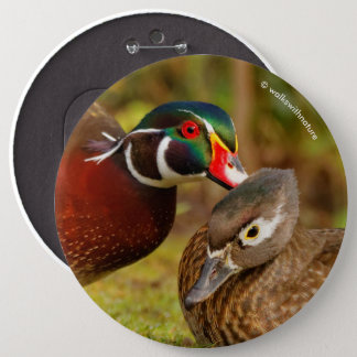 A Touching Moment Between Wood Duck Lovebirds 6 Inch Round Button