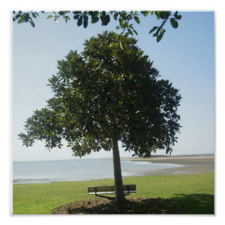 A Tree at Wellington Point Poster