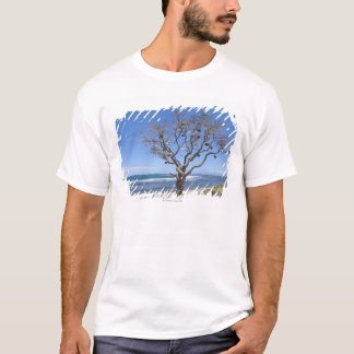 A tree decorated with old buoys on the beach in T-Shirt