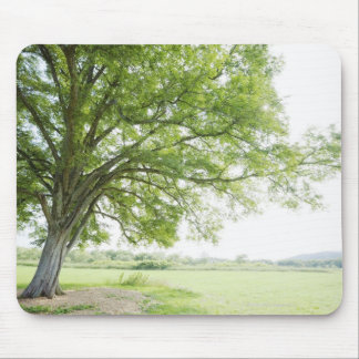 A tree in the field of grass mouse pad