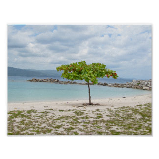 A TREE ON DEAD END BEACH POSTER