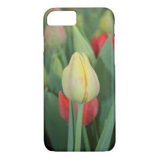 A tulip photo case for iPhone.
