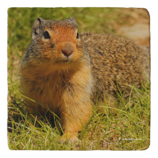 A Twitchy-Nosed Columbian Ground Squirrel Trivet