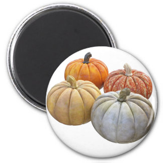 A Variety of Pumpkins Magnet