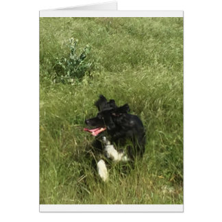 a very happy border collie / party invitation