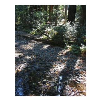 A Walk in Muir Woods Letterhead Design
