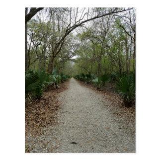 A walk in Nature Postcard