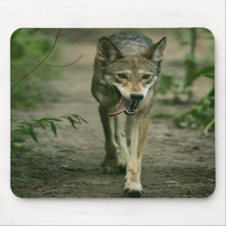 A Walk in the Woods Mousepads