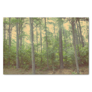 A Walk in the Woods tissue paper