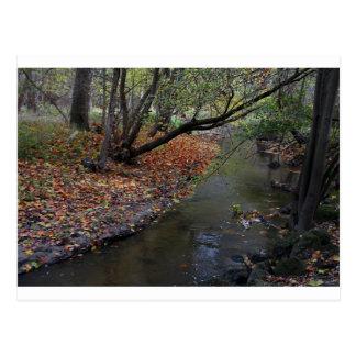 A Walk in Wildwood Postcard
