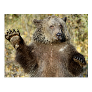 A Waving Grizzly Bear Postcard