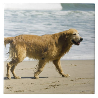 A wet dog at the beach. tile