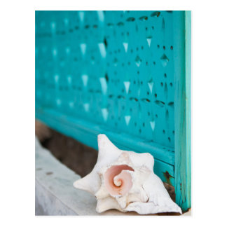 A White And Pink Jamaican Sea Shell Sits Alone Postcard