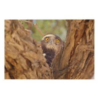 A White-breasted Snake Eagle Wood Print