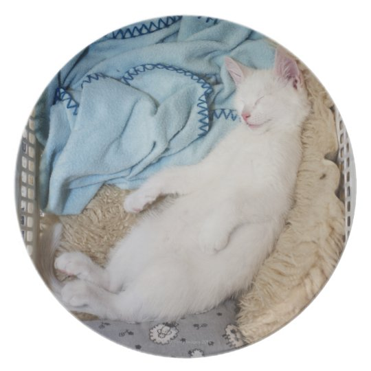 A white cat sleeping in a laundry basket, plate