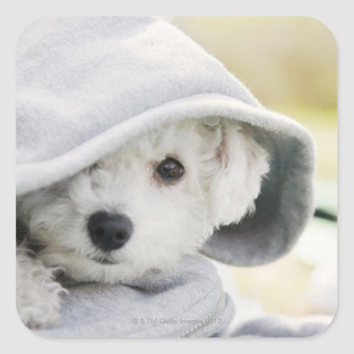 a white dog wearing a hood of shirt square sticker