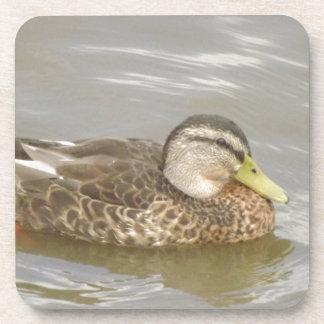 A Wild Duck Swimming Beverage Coaster