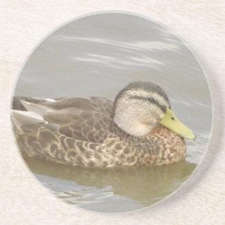 A Wild Duck Swimming Coasters