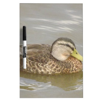A Wild Duck Swimming Dry-Erase Board