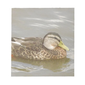A Wild Duck Swimming Notepads