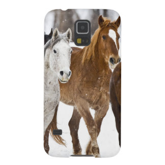 A winter scenic of running horses on The 2 Galaxy S5 Covers