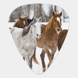 A winter scenic of running horses on The 2 Guitar Pick