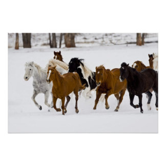 A winter scenic of running horses on The Poster