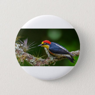A Yellow Fronted Woodpecker in Brazil 2 Inch Round Button