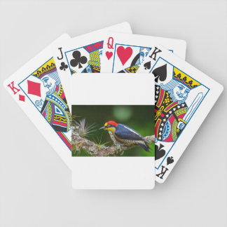 A Yellow Fronted Woodpecker in Brazil Bicycle Playing Cards