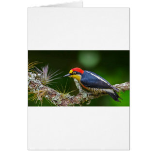 A Yellow Fronted Woodpecker in Brazil Card