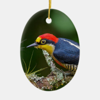 A Yellow Fronted Woodpecker in Brazil Ceramic Ornament