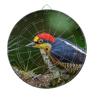 A Yellow Fronted Woodpecker in Brazil Dartboard