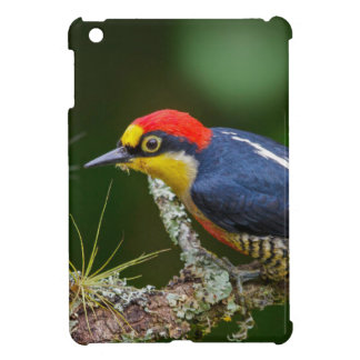A Yellow Fronted Woodpecker in Brazil iPad Mini Case