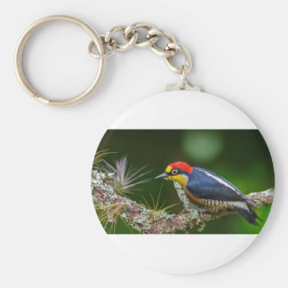 A Yellow Fronted Woodpecker in Brazil Keychain