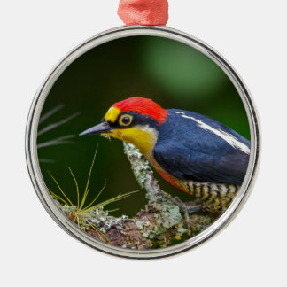 A Yellow Fronted Woodpecker in Brazil Metal Ornament