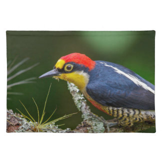 A Yellow Fronted Woodpecker in Brazil Placemat