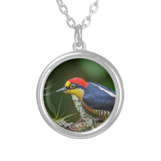 A Yellow Fronted Woodpecker in Brazil Silver Plated Necklace